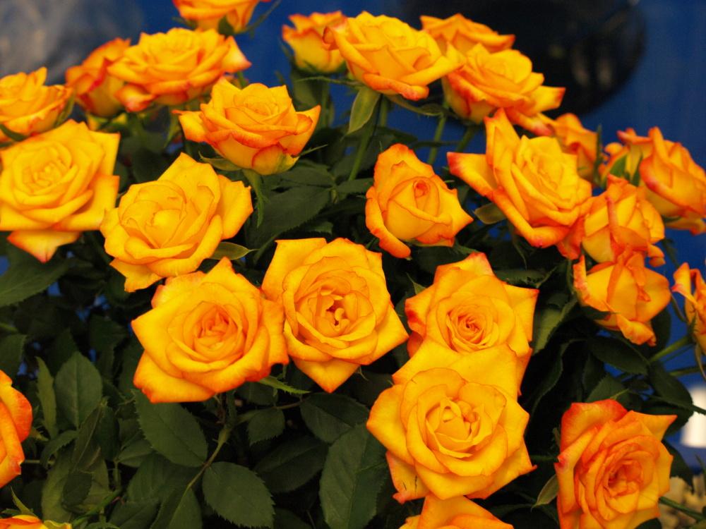 Jak udržet řezané květiny čerstvé