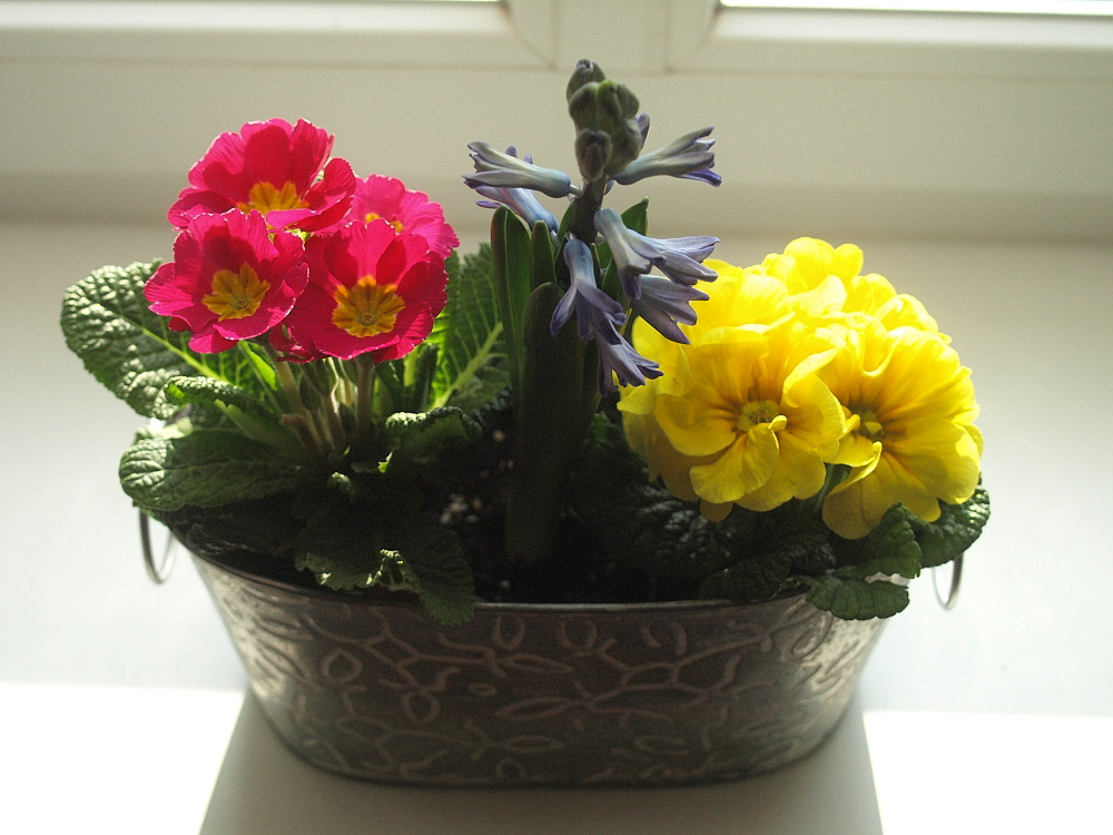Jarní dekorace 4