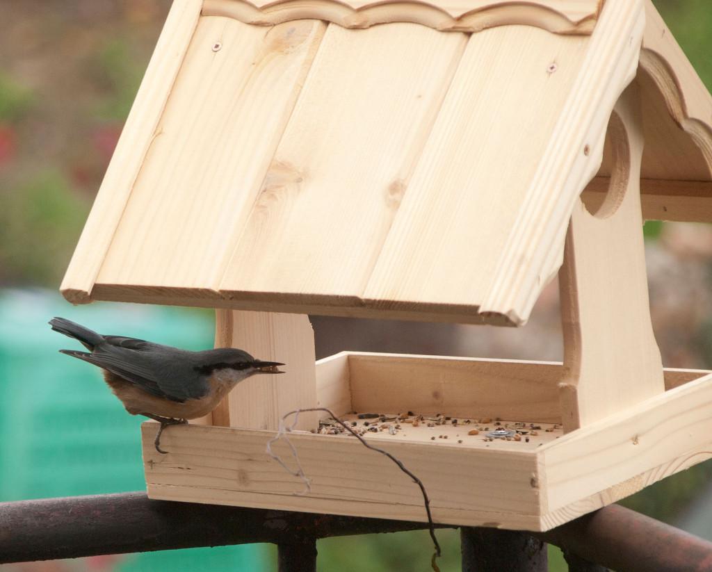 Vyrábíme krmítko pro ptactvo 1