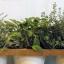 Jak doma pěstovat bylinky – netradiční způsoby
