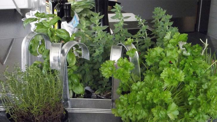 Zakládáme domácí bylinkovou zahrádku