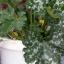 Cukety a dýně v nádobách: Rady a tipy nejen na pěstování