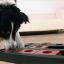 Hračky pro psy: Zábava skrývající mnoho užitečného