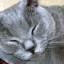 Jak pečovat o kočičí srst