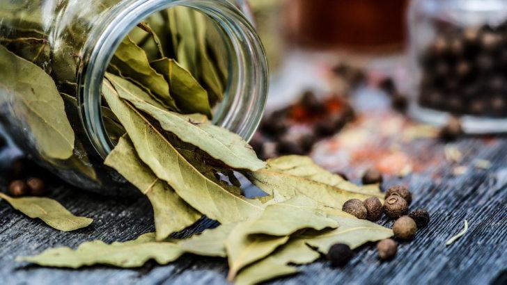 Bylinky – sklizeň a konzervace