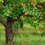 Čerstvé ovoce a zelenina v každé profesionální kuchyni