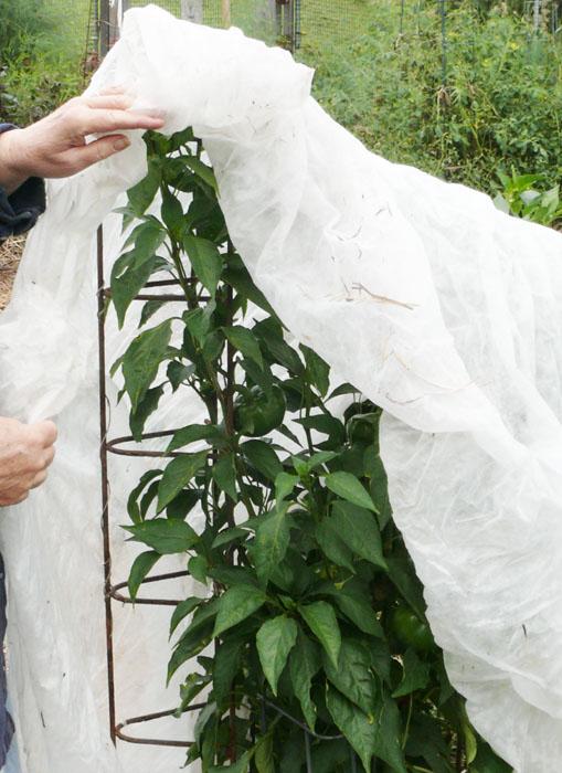 Před mrazem ochrání listy rostlin netkaná textilie