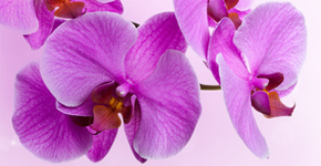 Orchideje nhled