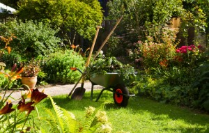 Plevel na zahradě