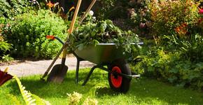 Proč se na zahradě daří plevelu a jak s ním bojovat