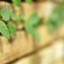 Zaostřeno na popínavé rostliny
