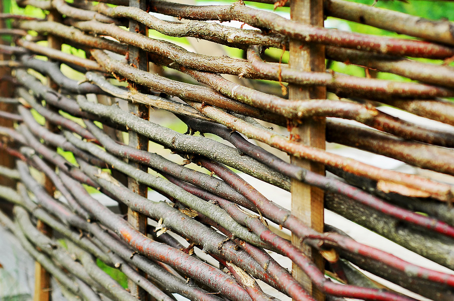 Živý plot z vrby