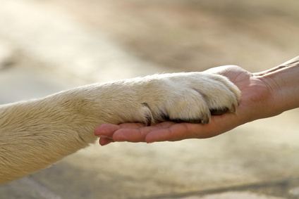 Základní psí povely