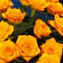Jak udržet řezané květiny co nejdéle svěží – 1. část