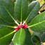 Jak pěstovat nádherné rododendrony