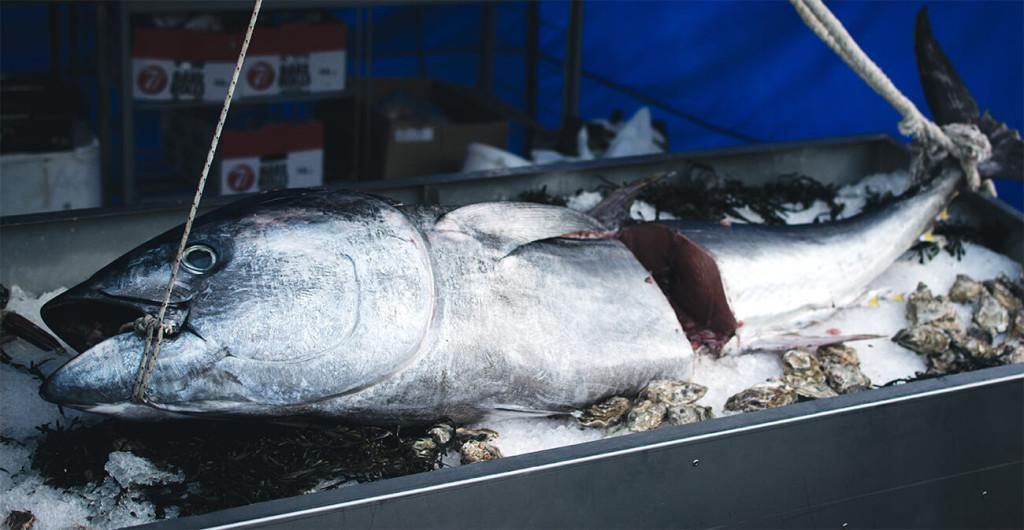 Španělská ryba