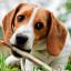 Jak krmit staré psy? Např. speciálními granulemi