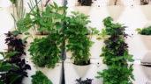 Jak zazimovat víceleté bylinky