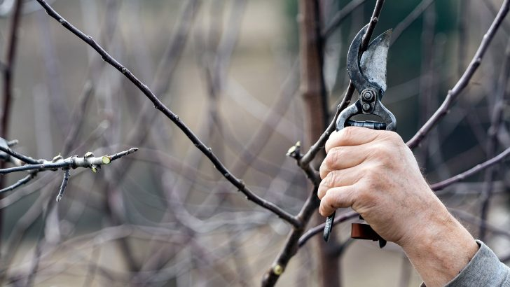 Jak v únoru řezat ovocné dřeviny