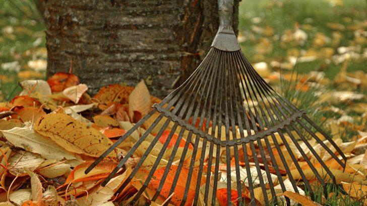 Jak využít spadané listí prakticky