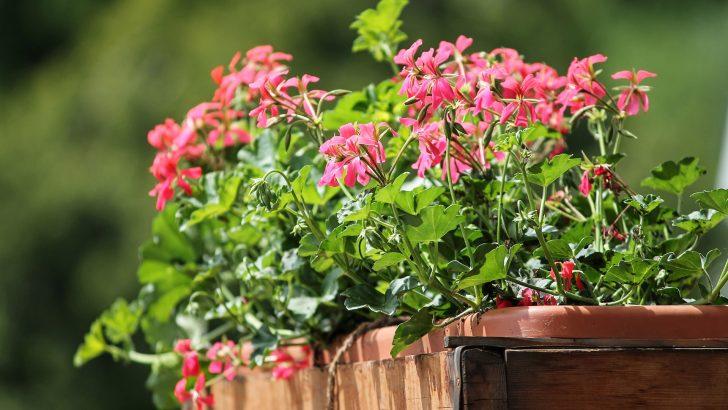Letnění pokojových rostlin