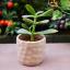 Namnožte si pokojové rostliny z řízků