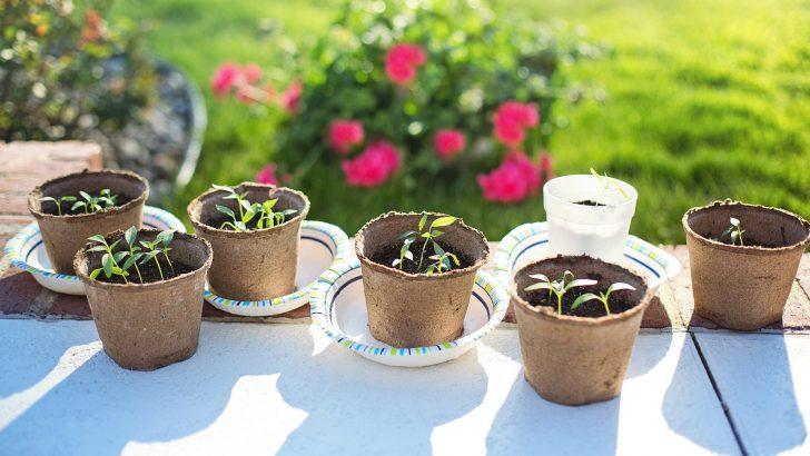 Předpěstujte si sazenice papriky již v únoru