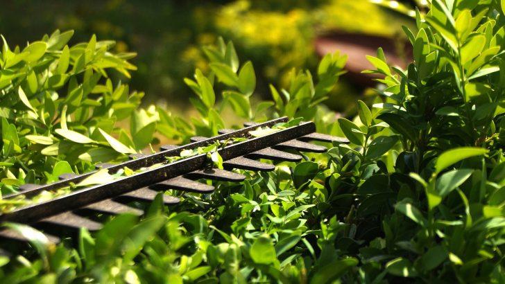 Řez pro podporu jarního rašení živého plotu