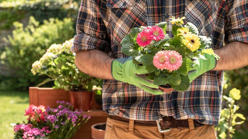 Zahradník, zahrádkář, květiny