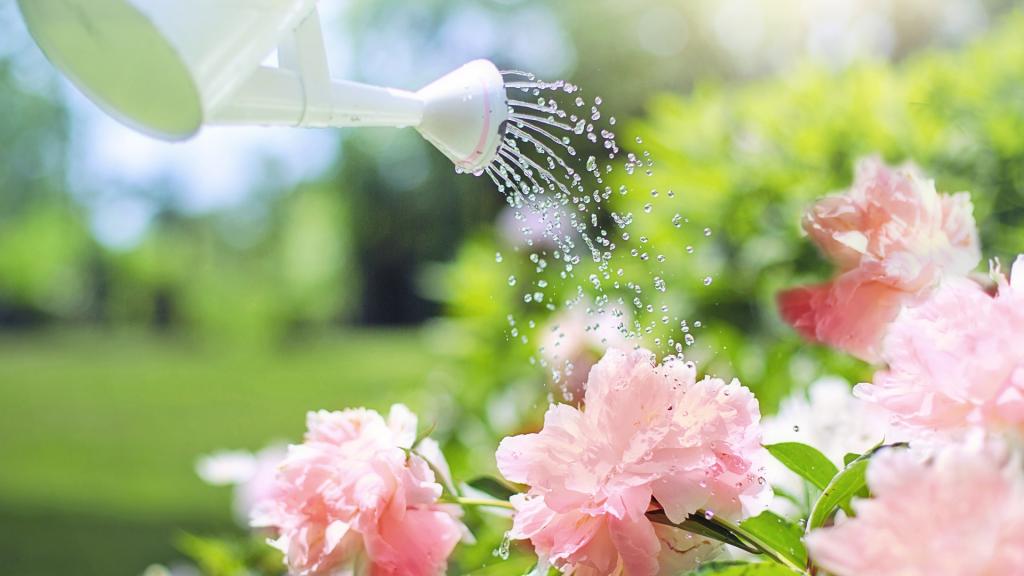 Zalévání zahrady