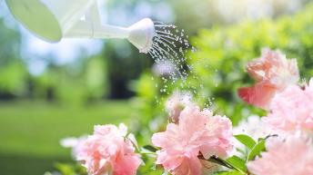 Jak šetřit vodou a mít zelenou zahrádku?
