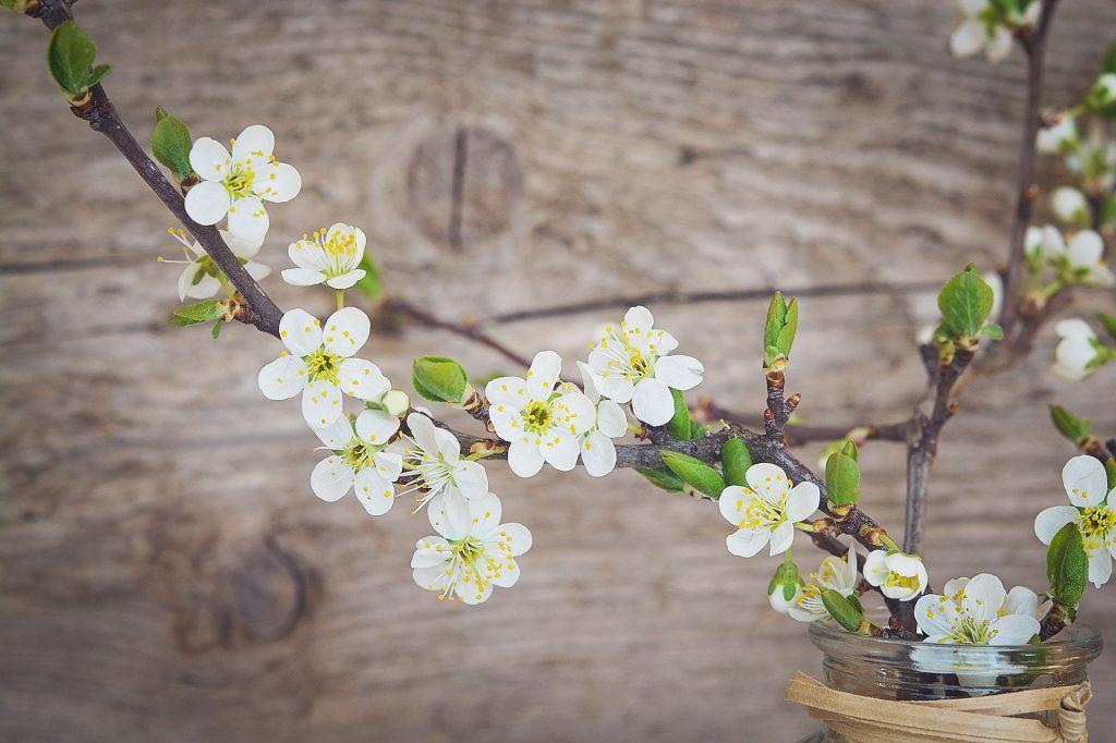 Kvetoucí barborka