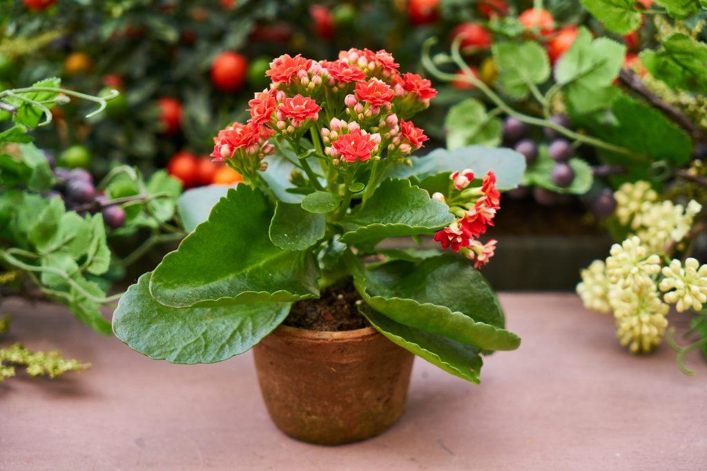 Pokojová rostlina v květináči