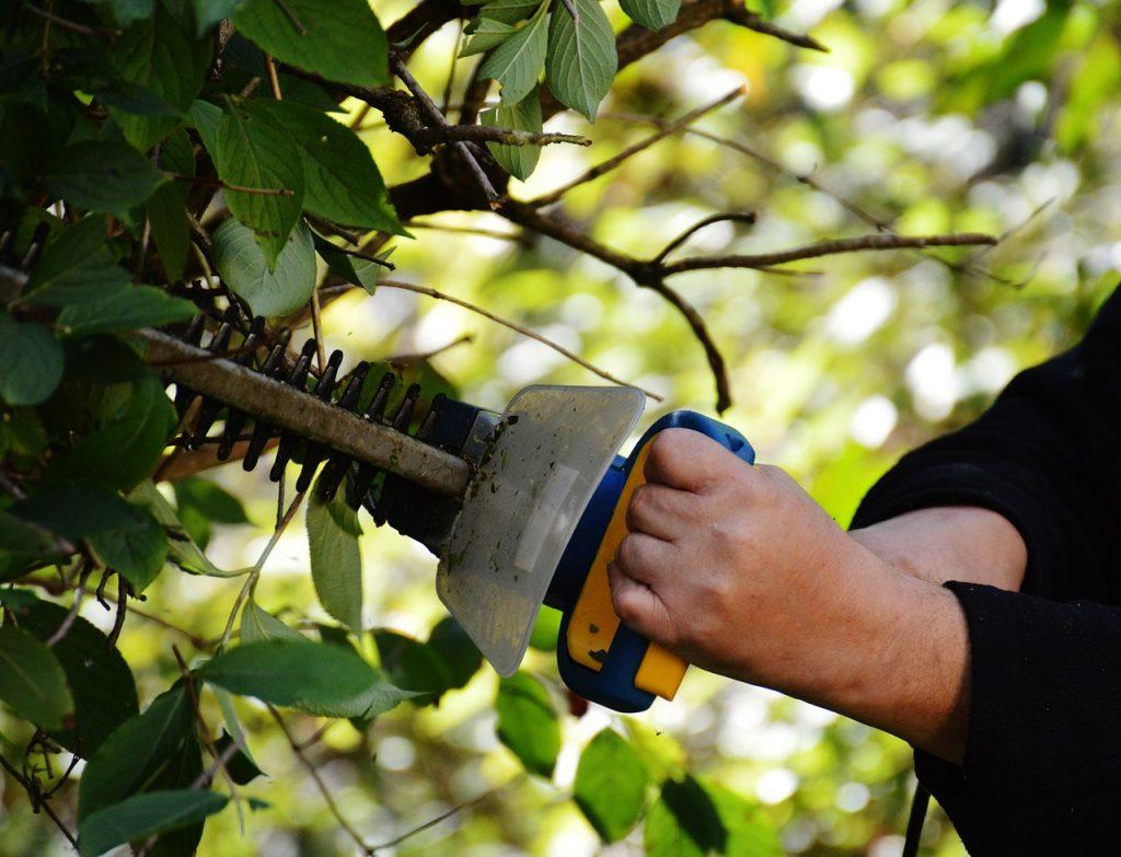 Řez plotu s plotovými nůžkami