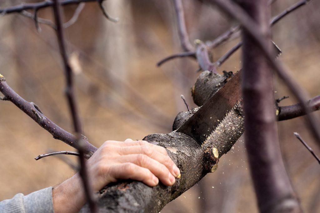 Řezání větve stromu pilkou