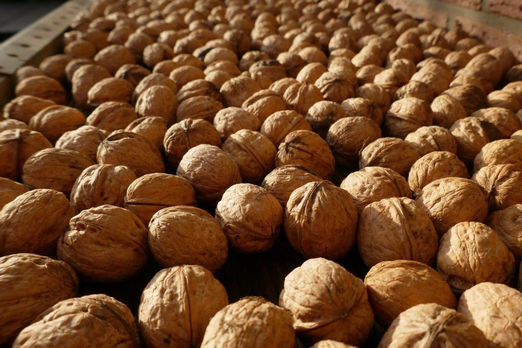 Sušení vlašských ořechů