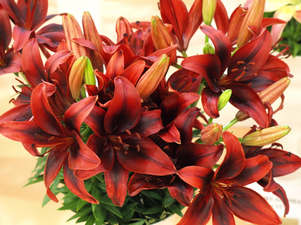 jak na řezané květiny, aby byly dlouho čerstvé