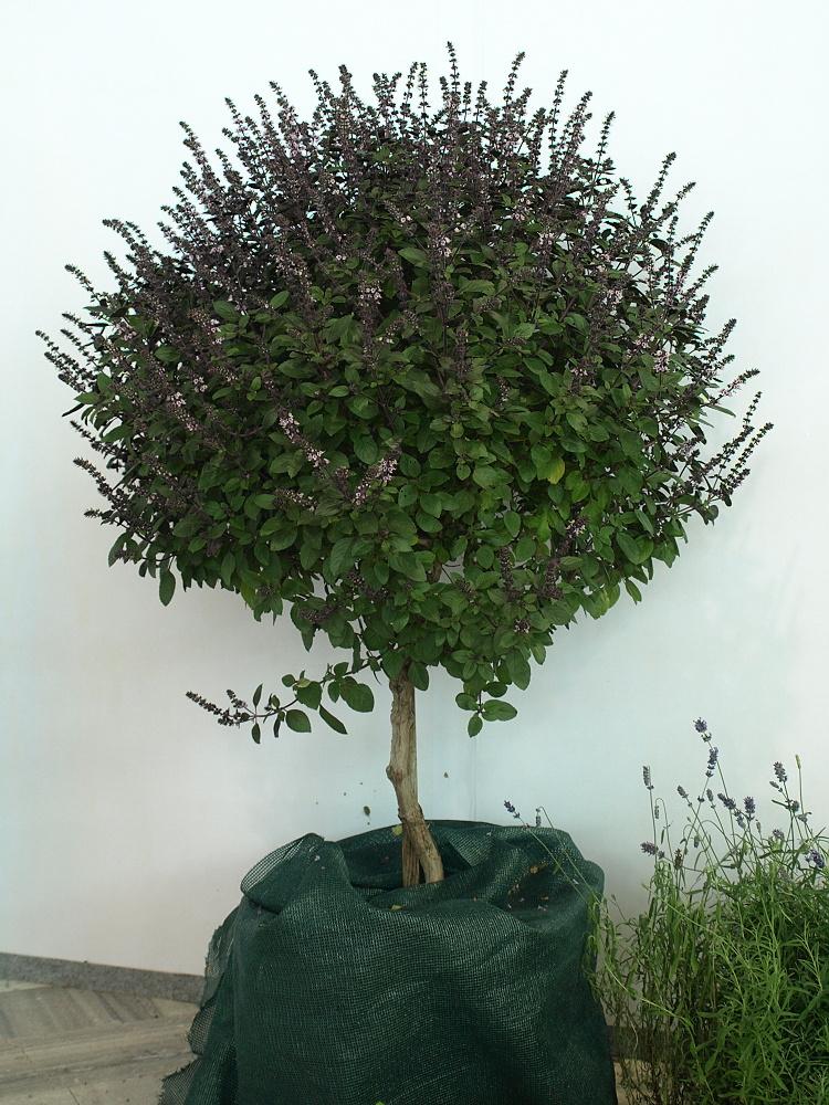 Pěstujeme bylinky netradičně