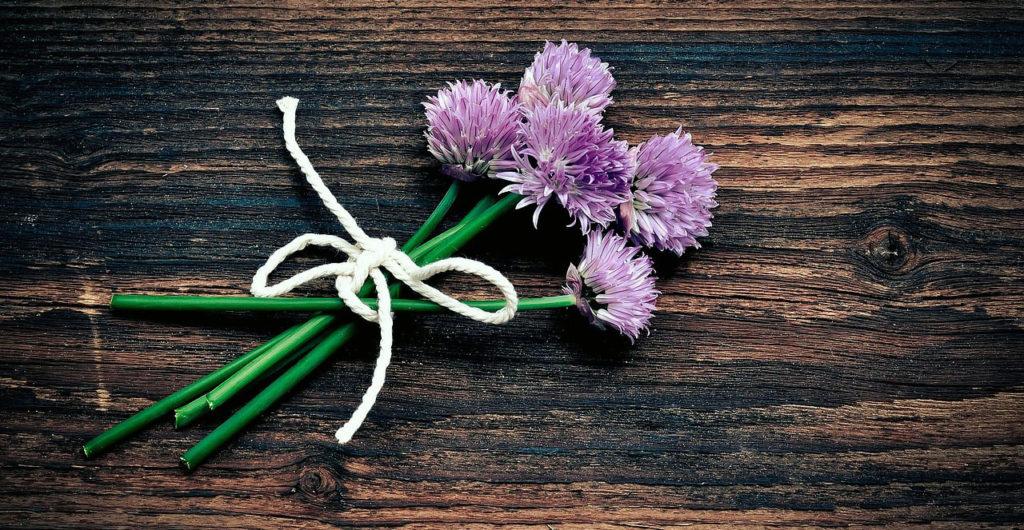 Pažitka, několik kvetoucích výhonků ve svazku