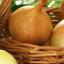 Cibule je ideální zeleninou pro zahrádkáře začátečníky