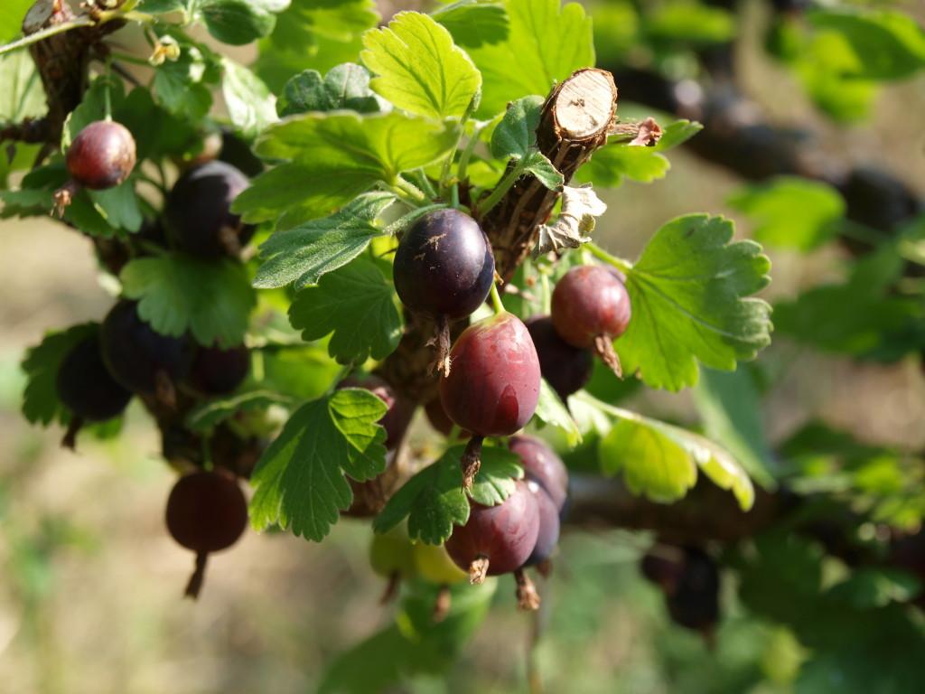 Dezert 3 - ovoce ze zahrádky