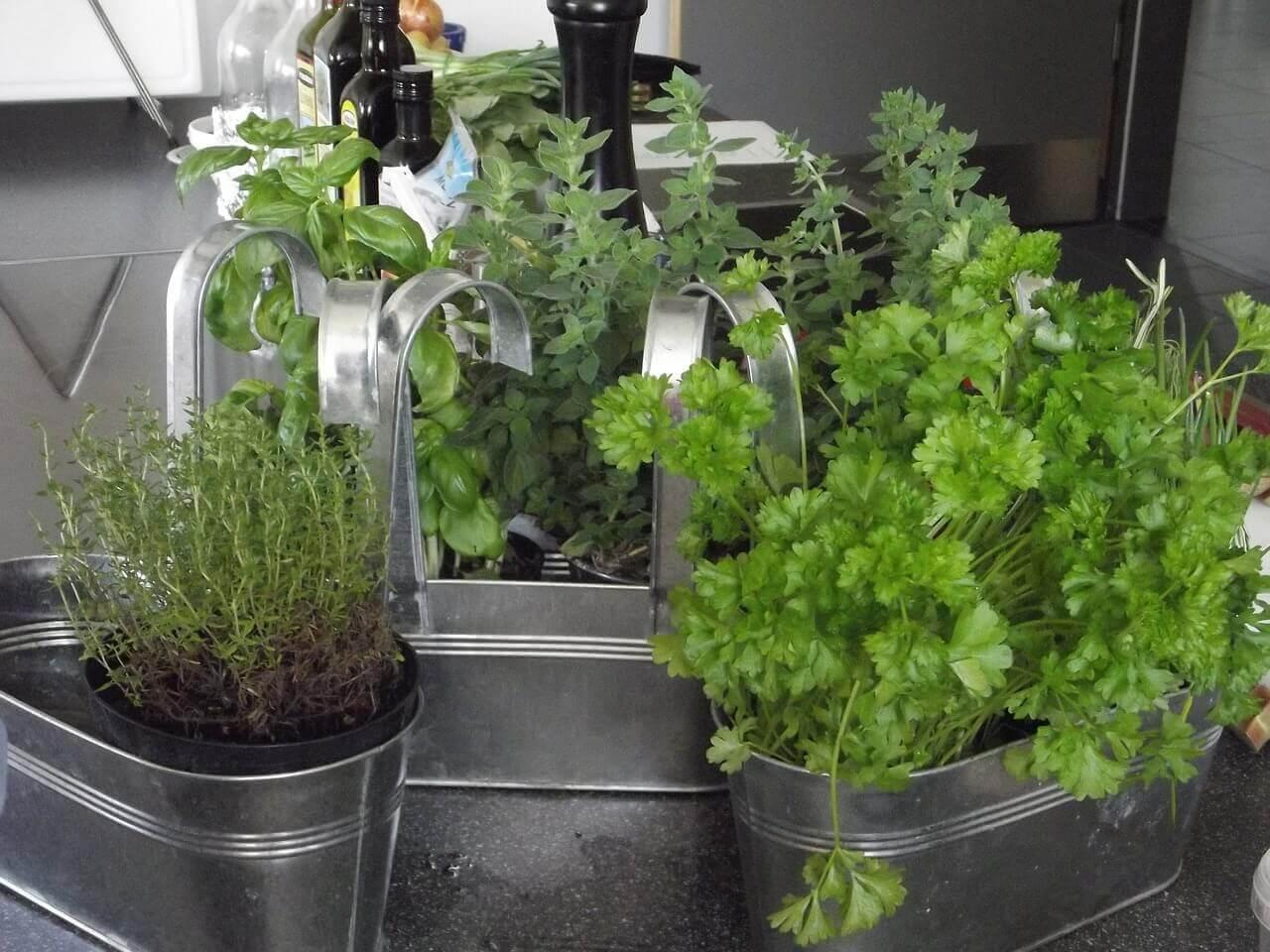 Domácí bylinky