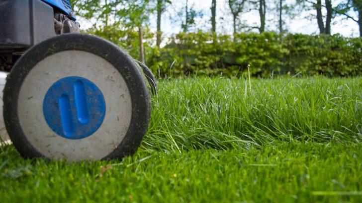 Elektrické zahradní sekačky: Co zvládnou a jakou vybrat?