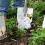Začínáme zahradničit: Užitečné rady pro efektivní práci