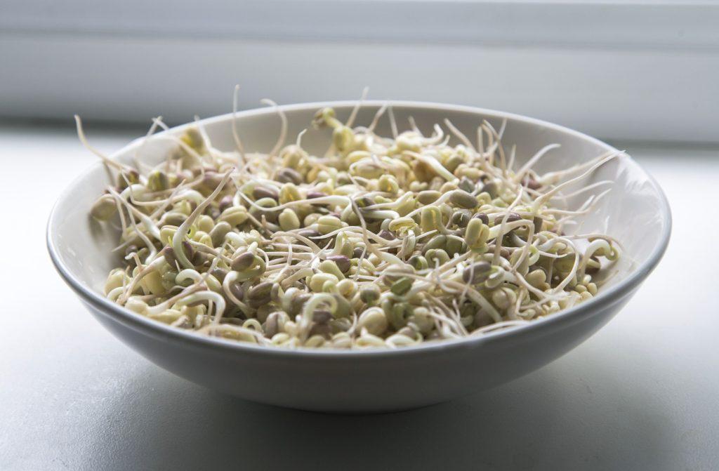 Miska s naklíčeními fazolemi Mungo