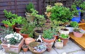 Poházené rostliny v květnících