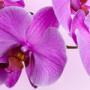 Orchideje – krásné a jednoduché
