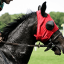 Nejlepší jezdecké potřeby mají tam, kde koně milují