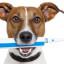 Jak pečovat o psí chrup