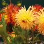 Jak udržet řezané květiny co nejdéle svěží – 2. část